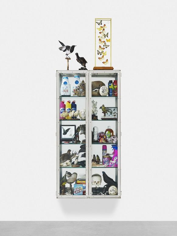 Le cabinet de curiosité - La Maison DEYROLLES Vue_Cabinet_OK_XS_pour_site