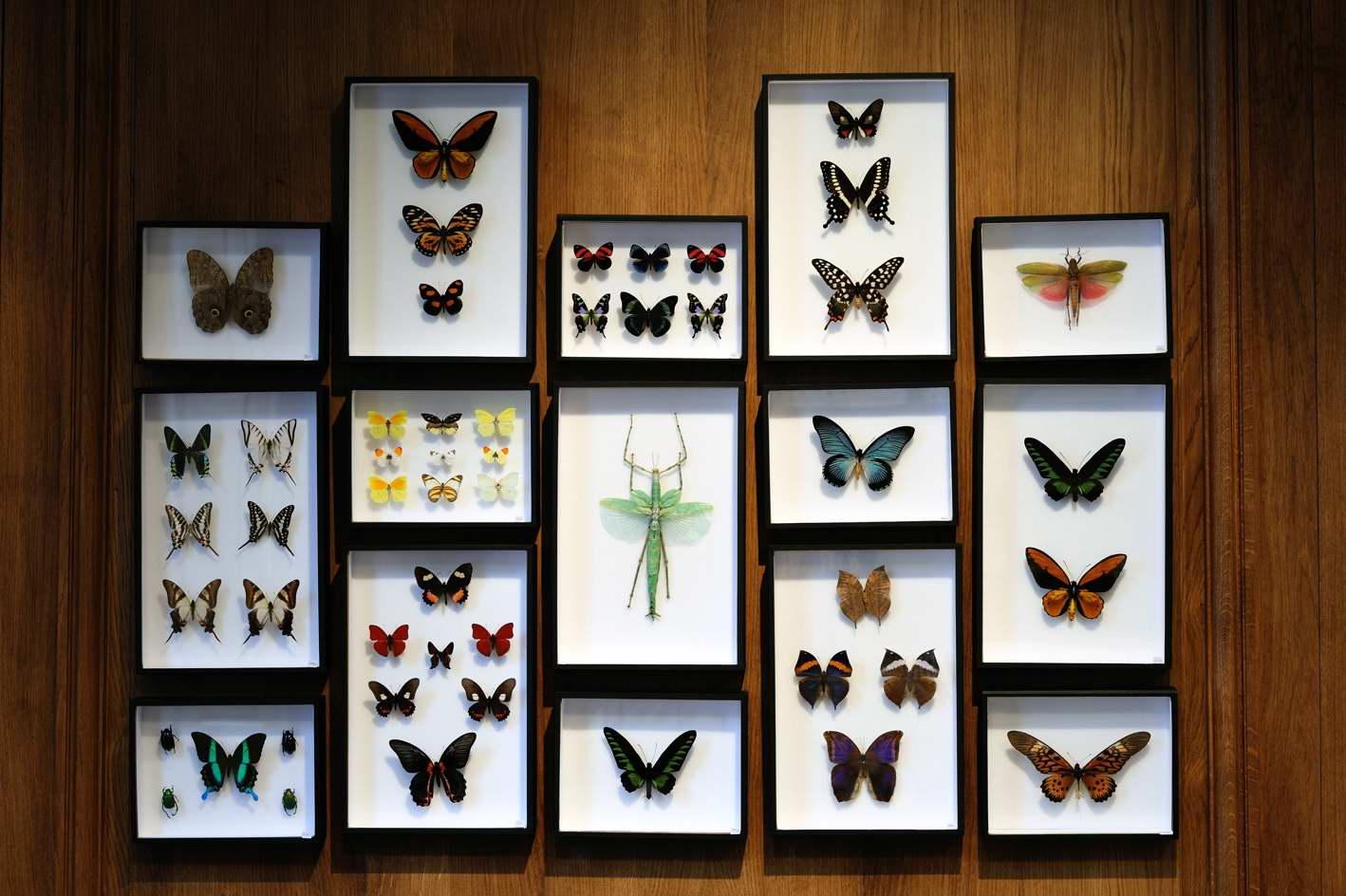 Très Entomologie - Deyrolle HA61