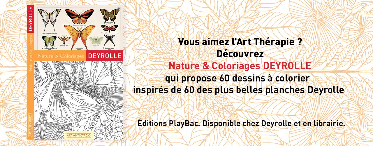 Connu Deyrolle - Taxidermie, entomologie, curiosités naturelles - Deyrolle CW68