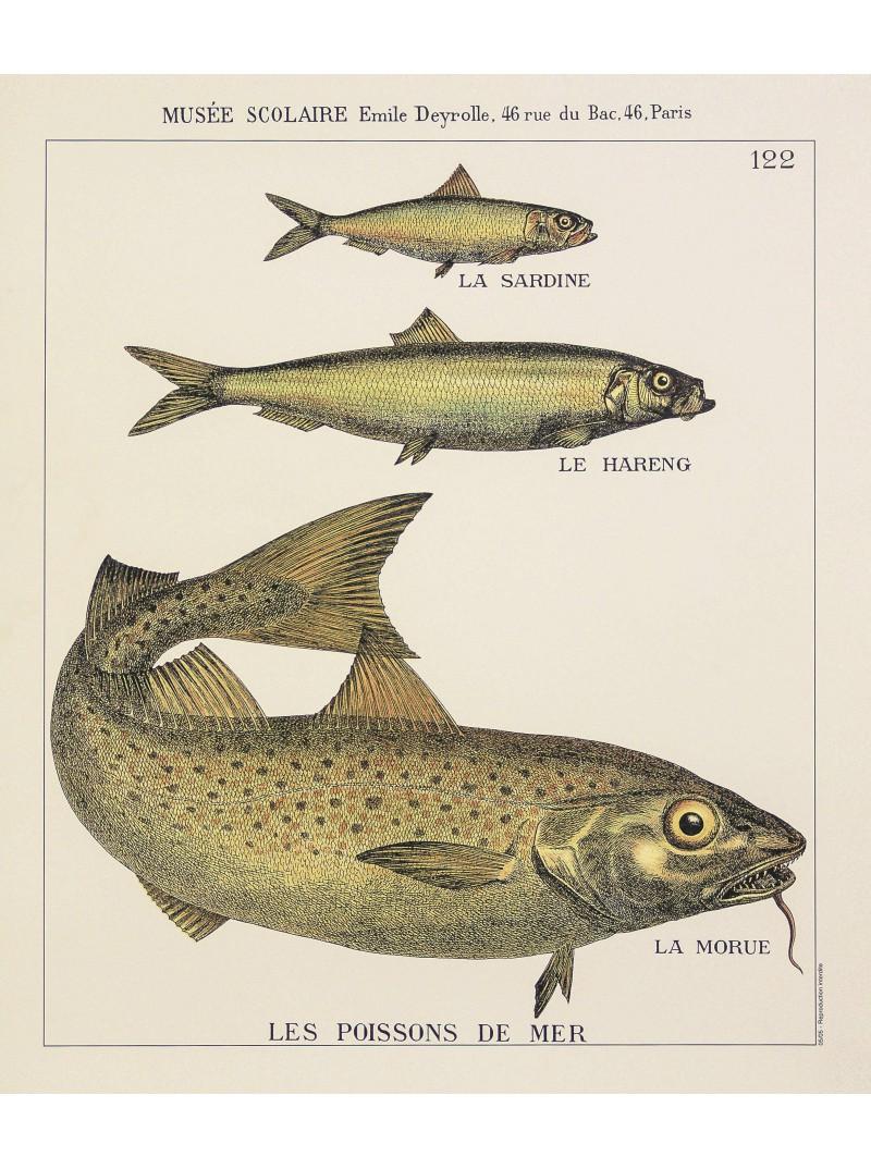 poissons de mer