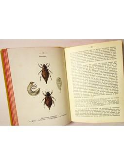 Atlas de poche des insectes de France