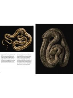 Evolution - La théorie en images