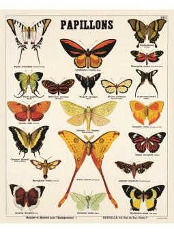 Ls papillons