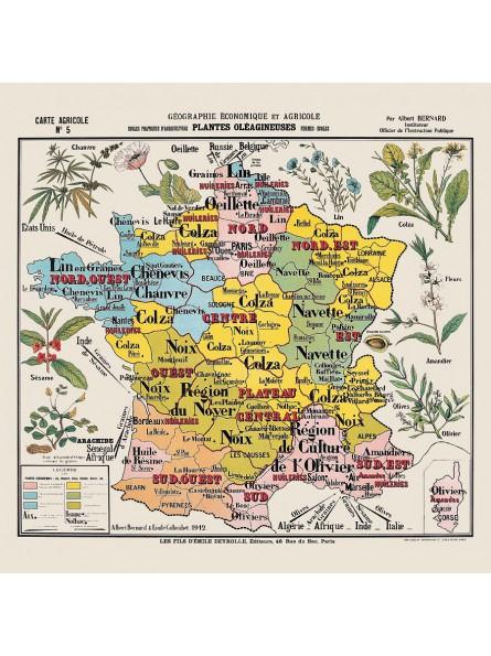"""Carte de géographie n°5 : """"Plantes oléagineuses"""""""