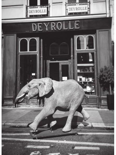 Carte postale : L'éléphant