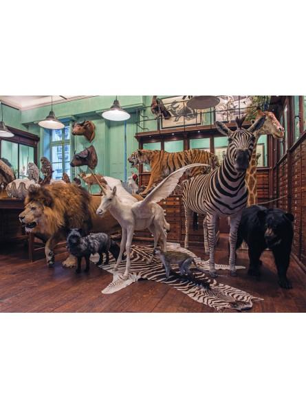 Carte postale : La licorne