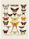 Carte postale : Papillons