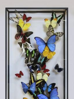 Envolée multicolore de papillons