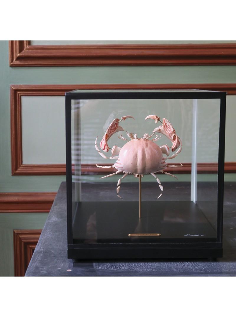 Eclaté de crabe exotique