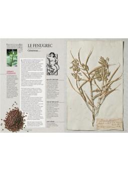 L'herbier érotique