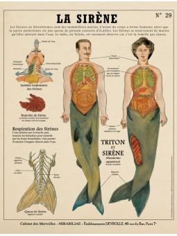 La sirène, Créatures Fantastiques